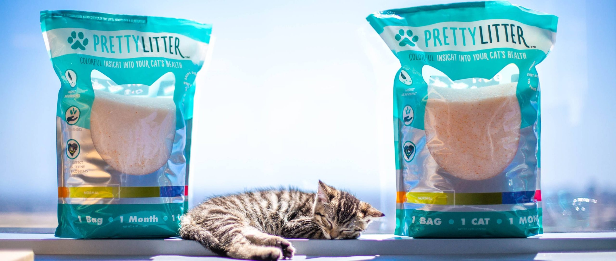 prettylitters cat litters medical diagnosis